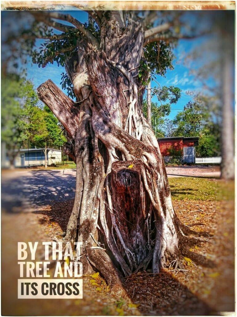 Von Diesem Baum Aufbewahrt